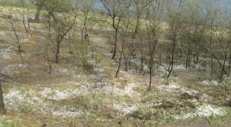 मेवात क्षेत्र में औलावृष्टि से नष्ट हुई फसलें